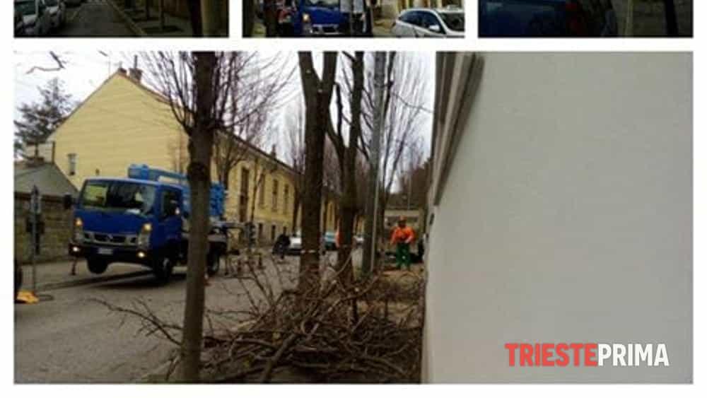 Ufficio Verde Pubblico Trieste : Verde pubblico lavori di manutenzione in diverse zone della città