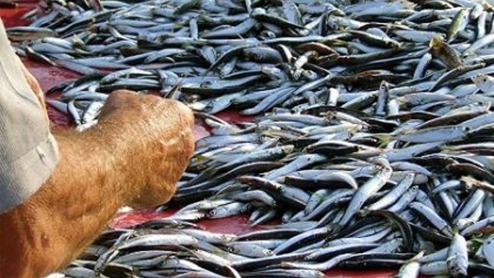 Pesca in libia flag gac fvg regione e mipaaf preparano piano d 39 azione - Contributo regionale fvg prima casa 2017 ...
